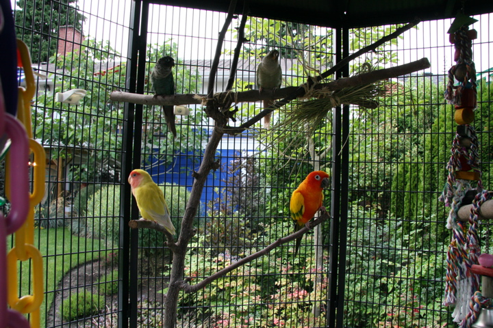 Four parrots out in aviary.