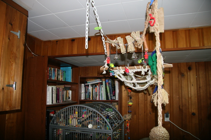 Parrot play area
